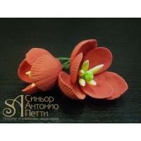 Цветы из мастики - Бутоны тюльпана, Красные, 2шт. (11927*D/p)